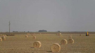 Jesen u Vojvodini, seno
